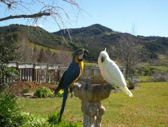 Mill Creek Road Bird